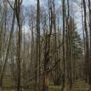 NPP Hojkovské rašeliniště, 16.4.2004, foto Vojtěch Kodet