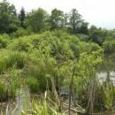 Třeštický rybník, 24.6.2010, foto Vojtěch Kodet