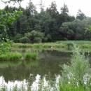 Borský rybník, 6.7.2015, foto Vojtěch Kodet
