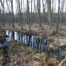 Olešský rybník, 31.3.2017, foto Vojtěch Kodet