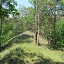 I když je dnes oblast Čertova ocasu zarostlá lesem, na světlých místech dosud přežívají teplomilné nelesní druhy mravenců, NPR Mohelenská hadcová step, foto Pavel Bezděčka.