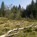 Rašeliniště Pod Trojanem, 4.5.2006, foto Vojtěch Kodet